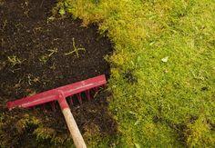 How to Grow Moss - Bob Vila http://www.bobvila.com/articles/how-to-grow-moss/#.U5I25ii8uZQ