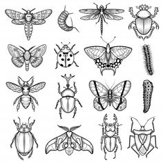 Insects black white line icons set with dragonfly and caterpillar flat isolated vector illustration , Tattoo Sketches, Tattoo Drawings, Art Sketches, Art Drawings, Flash Art Tattoos, Insect Tattoo, Cicada Tattoo, Beetle Tattoo, Mini Tattoos