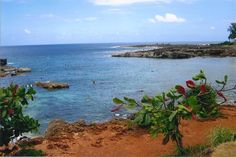 A view of Shark's Cove