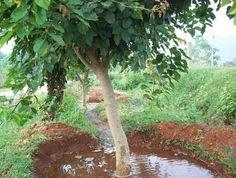Как правильно поливать деревья и кусты в саду   В саду (Огород.ru)