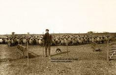Victorian Shepherd and his flock (Digital Version)