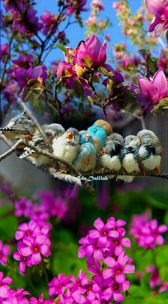 Lovely Good NightSweet Dreams When Your Sun ShinesGood Morning! ##GoodMorning ##NewDay ##HappyNewWeek ##Blooms ##BlueSkies ##SweetBir... - Mary Ana - Google+