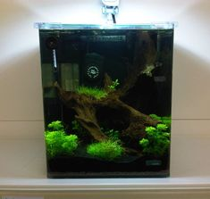 Keeping fish and Invertebrates in small aquariums is an art which has recently become a lot easier due to many advances in fishkeeping.It is easy to provide a stable and beautiful nano aquarium in your home or workplace with fantastic results. Nano aquariums are classed as small tanks usually no more than 35 litres that contain a miniature environment for marine and tropical species.In this ...