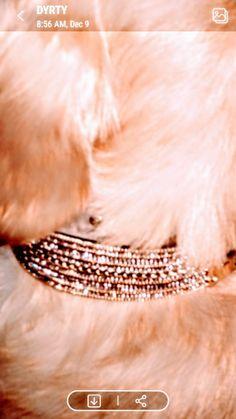 Designer Dog Collars, Dog Accessories, Dog Design, Hand Sewing, Sewing By Hand, Hand Stitching, Dog Supplies