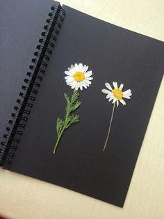 pressed arranged daisies