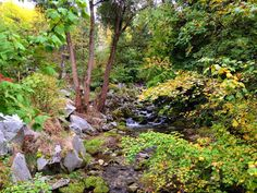 #naturallywildphotography #nelson #nelsonbc #cottonwoodfalls #green #falltime #fall #beautifulbritishcolumbia #beautifulbc #ilovebc #ilovenelson #ilovethekootenays #kootenays #ilovecanada #hellobc #huffpostbc #canadarocks #proudtobecanadian #ilovewhereilive #wildernessculture #worldexplorermag #welcometocanada #discoverbc #discovercanada #explorebc #explorecanada #explorenature #tourismcanada #tourismbc #insta_international by naturallywildphotography