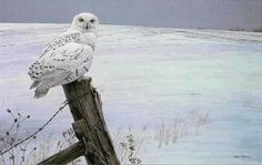 Robert Bateman Ready For The Hunt