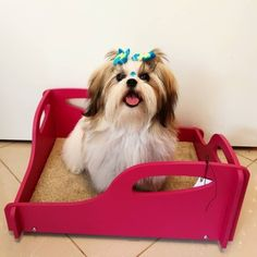 Shih Tzu, Blog, Animals, Doggies, Animals And Pets, Pereira, Dog, Brazil, Animales