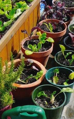 Tips on picking the right pots, plants and soil for container gardening. #garden #gardening