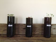 My Wild Thing and Twinkle Toes: Visual Guide: Make your own Hydroponic Wine Bottle Planter