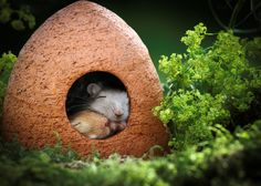 Asleep in the mouse house.