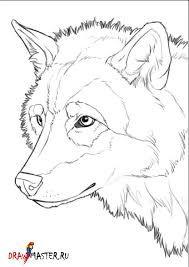 Картинки по запросу волк вид сверху