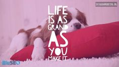 #lifeisgrand #cutepuppy # Instagram @martinhosner #followme