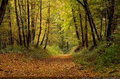 Un sentier dans la forêt - Forêt de Rambouillet (Haute vallée de Chevreuse, Yvelines)