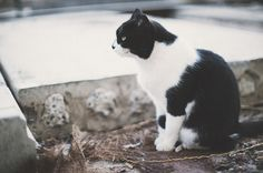 cats of fuerteventura | Flickr - Photo Sharing!