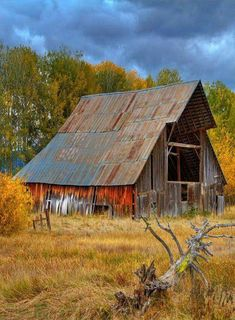 Searching for red and mostly finding gold colors. I liked the way the wood was worn on this old barn.