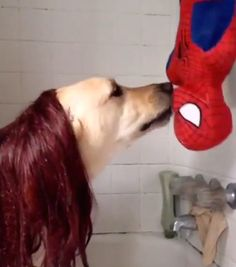 Pete The Dog Dresses Like Mary Jane And Shares Upside Down Kiss With Spider-Man [Video]