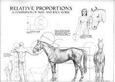 Relative Proportions Of Man and Horse