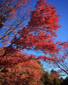 #WonderWatch 2015-123 Fall Fever #nature #NaturePhotography #SandyLongPhotos #foliage #FallFoliage #ahh #PeakFoliage #October #Autumn #beauty #fall #GlimpsesOfFall #red #leaves #PoconoMtns #UpperDelawareRiverRegion