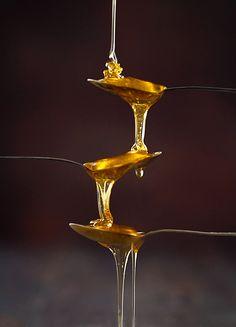 Não é digno de saborear o mel aquele que se afasta da colmeia com medo das picadelas das abelhas.  ____William Shakespeare