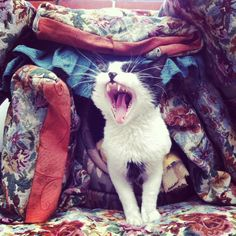 stop that cat. you are not in the wild guarding your pillow and blanket fort.