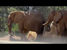 Watch this in HD & full-screen. Trust us. - Gorgeous Elephant Footage From the San Diego Zoo