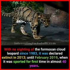 Interesting Science Facts, Wtf Fun Facts, Fascinating Facts, Crazy Facts, Random Facts, What The Fact, Fact Of The Day, Weird History Facts