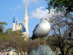 Make like an early bird and get the worm ;) Plan your vacation to Orlando ahead of time with these tips!