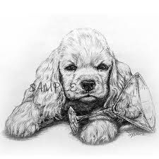 Image result for cocker spaniel drawing