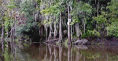 ~HISTORY OF THE NAME~ Why Shingle Creek? The creek passes through the perimeter of the property. Early pioneers who first settled Central Florida in the 1800s were drawn by the splendor of this picturesque creek. They used the creek for logging cypress trees. These logs were floated to a nearby mill and eventually made into shingles for their homes thus, the name Shingle Creek | Rosen Shingle Creek | #orlando #rosen #hotels #resorts #idrive #history #creek