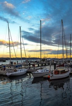 Sailboats in the marina at sunset - Hobart, Tasmania