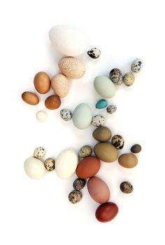 eggs (mary jo hoffman). Colours that are soft and muted would be lovely for a fall/autumn colour palette for glass beads.