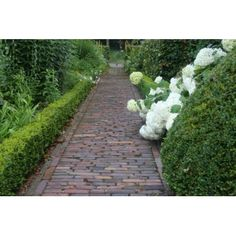 Green and cream with brick path Dutch Gardens, Small Gardens, Garden Care, Dream Garden, Home And Garden, Garden Pavers, Brick Path, Paved Patio, Hedges