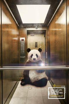 Животные делают селфи в новой рекламе National Geographic. Изображение №1.