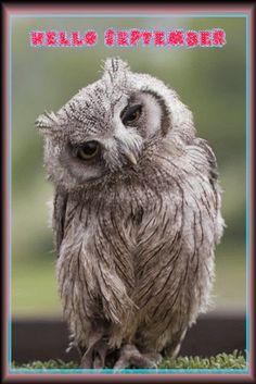 ao sex owl tinter single