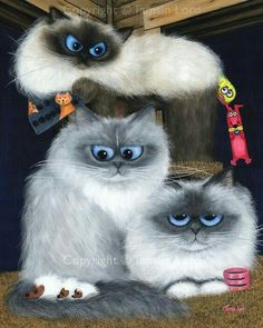 Silly blue-eyed himalayans