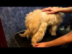 Одежда для собак. Как сшить комбинезон. \ DIY. Sewing Pet clothing ( Sew a rain-coat.) - YouTube