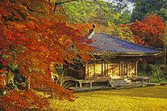 Fuki-ji Temple, Oita, Japan 大分 富貴寺の紅葉