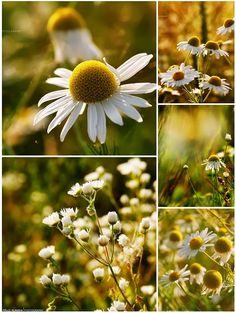 A nyár virágai | Életszépítők