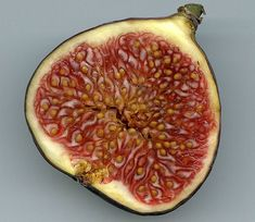 Inside the rounded fruit of a fig tree is a maze of flowers. That is, a fig is not actually a fruit; it is an inflorescence—a cluster of many flowers and seeds contained inside a bulbous stem. Because of this unusual arrangement, the seeds—technically the ovaries of the fig—require a specialized pollinator that is adapted to navigate within these confined quarters. Here begins the story of the relationship between figs and fig wasps.