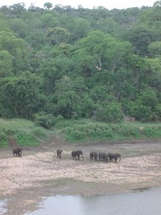 Chilo Gorge view from the deck with late afternoon tea Bull Elephant, Afternoon Tea, Safari, Deck, Seasons, Seasons Of The Year, Decor, Decks