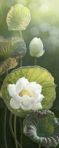 Lotus modren villa flower flowers pinterest lotus villas lotus modren villa flower flowers pinterest lotus villas and flowers mightylinksfo
