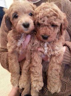 puppies bought by next door neighbor