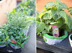 How To: Plant a Vegetable Garden | Our Best Bites