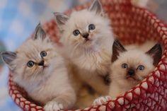 A Basketful of Cuteness...