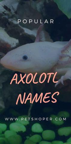 Cute axolotl names Cute Little Animals, Cute Funny Animals, Axolotl Pet, Cute Bunny Pictures, John Snow, Cute Baby Bunnies, Creative Names, Cute Names, Animal Jokes