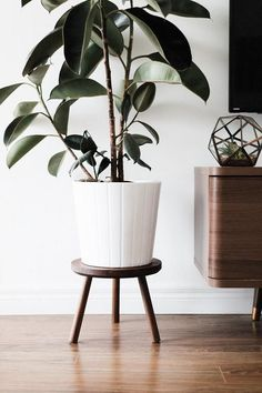 Mid Century Modern Plant Stand Stool with Round Top, Hand Made in Canada, Walnut Wood, Retro Home Decor - Plant stand - Plants Modern Plant Stand, Retro Home Decor, Stand Design, Mid Century Style, Home Living, Living Room, Walnut Wood, Plant Decor, Houseplants