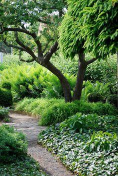 Saniaiset, heinät ja maanpeiteperennat lumoavat Ulla Molinin puutarhassa…