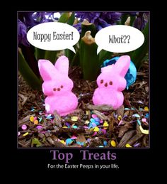 Image detail for -What's In Your Easter Basket? Easter treats-peeps cute-funny – e ...