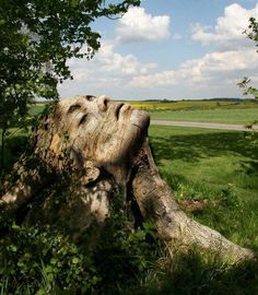 Enchanting Tree stump carved to resemble face